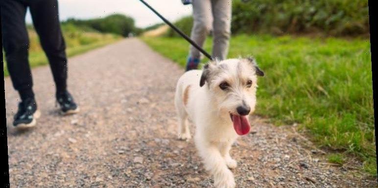 Can I walk my dog in lockdown?