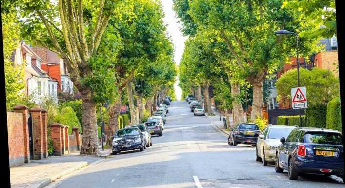 All new UK streets set to be lined with trees to make more beautiful neighbourhoods