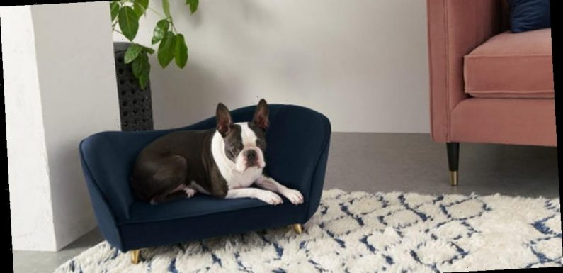 You can now get a stylish velvet sofa for your dog which matches your own