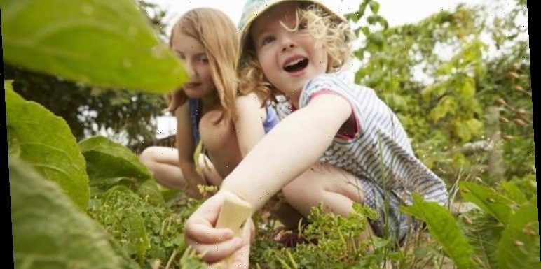 Eco kids are smarter than parents with broader knowledge of wildlife