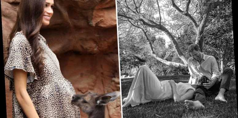 Pregnant 'Meghan Markle' goes to an Australian zoo and her bump even gets a kiss from a kangaroo