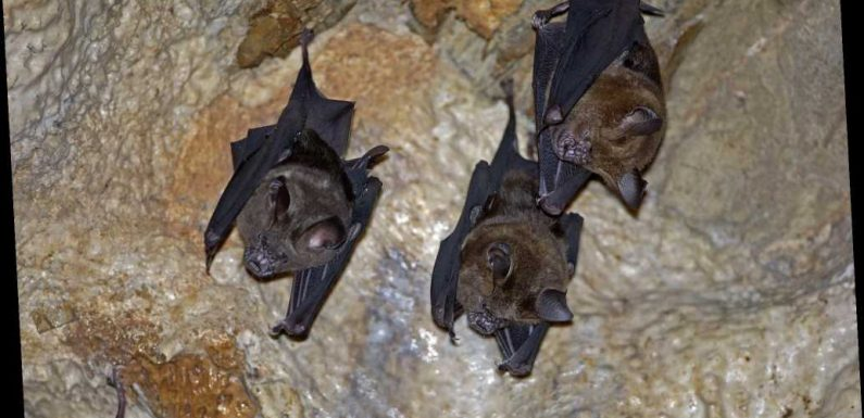 New coronavirus discovered in bats in Thailand similar to COVID-19