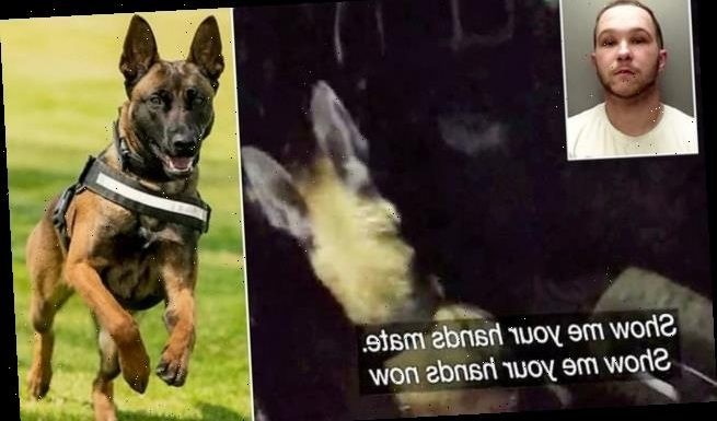 Pancho the police dog sniffs out car thieves after 100mph car chase