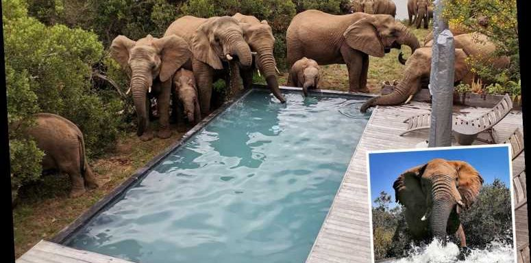 Incredible pics show herd of wild elephants cooling off and having a drink at a swimming pool in sweltering 38C heat