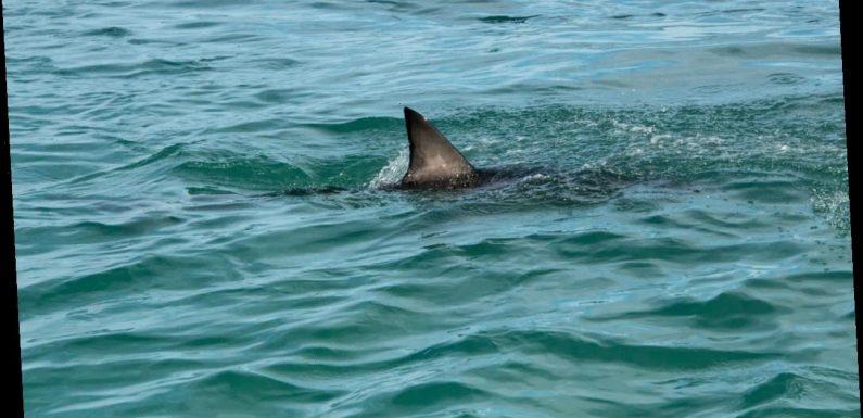 Florida shark attack turns Minnesota family's tropical trip into a nightmare