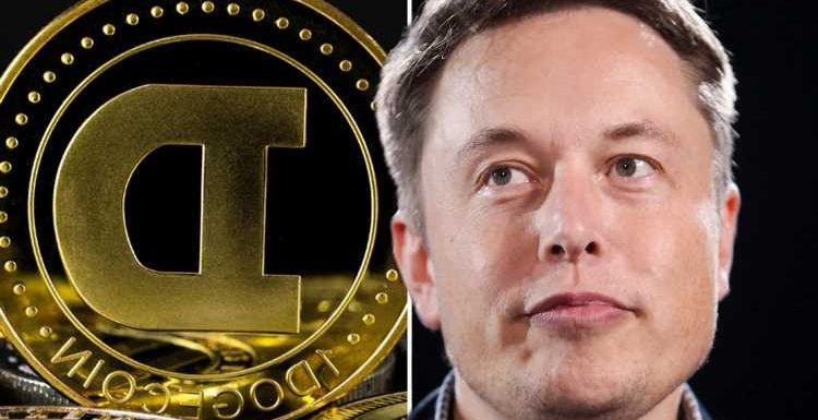 Dogecoin price soars to all-time high as Elon Musk spurs cryptocurrency frenzy