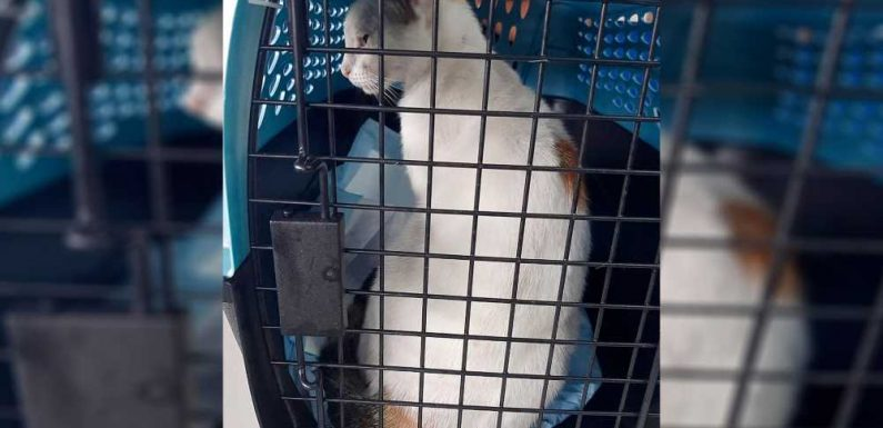 Drug-runner's cat caught trying to sneak narcotics into Panama prison