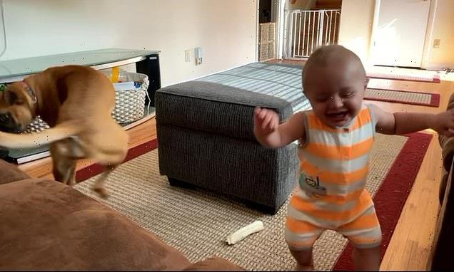Giggling toddler tries to copy his dog as she chases her tail