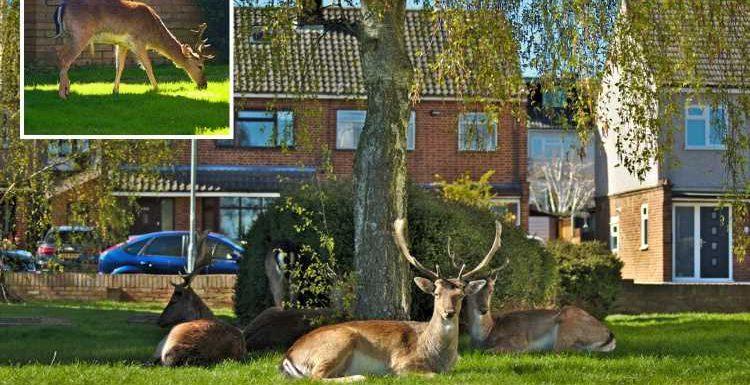 Herd of DEER make themselves at home on East London estate leaving residents stunned