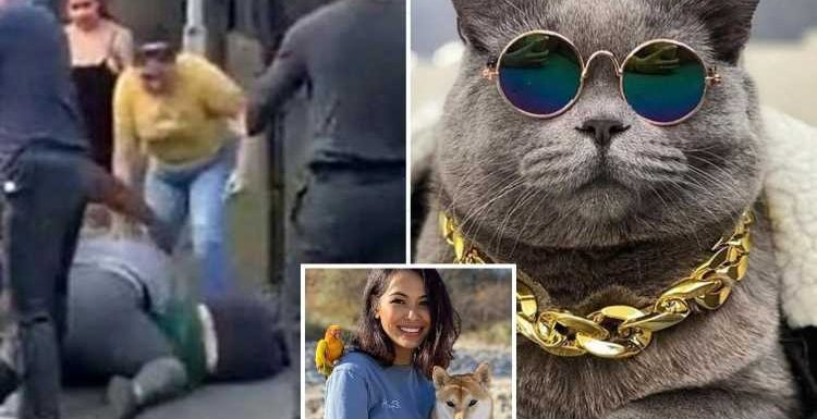 Instagram star cat Ponzu dies after boy, 12, drags & flings it by leash – sparking mass brawl in park