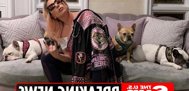 Lady Gaga's 'dognappers' arrested for attempted murder and robbery after dogwalker shot & injured