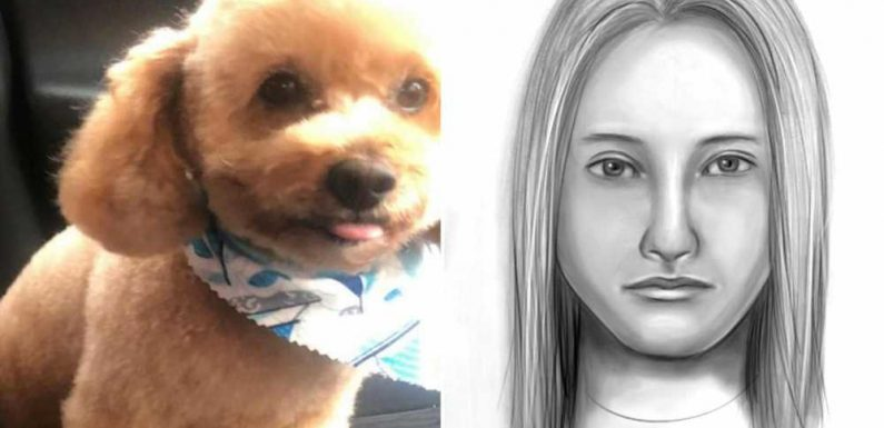 Long Island cops hunt hit-and-run killer of tiny emotional-support dog