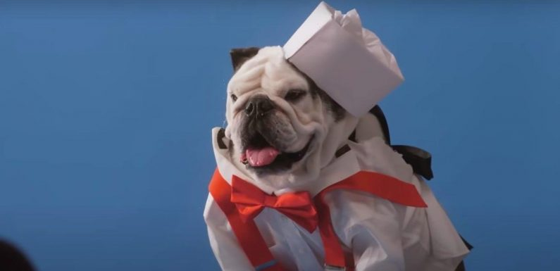 Netflix's 'Pet Stars' Trailer is Full of Good Doggos and All Kinds of Talented Pets