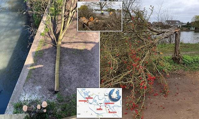 Police arrest man, 24, after 50 trees chopped down across Surrey