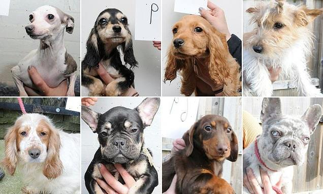 Police issue images of 48 dogs rescued from traveller camp