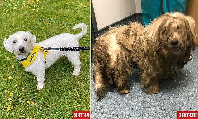 Rescue terrier-cross Frankie's incredible transformation trim