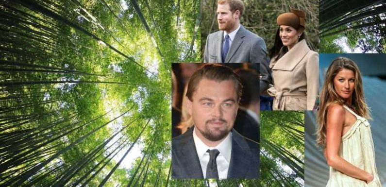 Stars In The Woods: Celebs Who are Passionate About Saving Forests