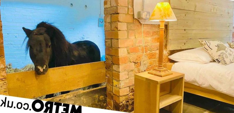 You can enjoy a sleepover in an Airbnb with a miniature horse named Basil