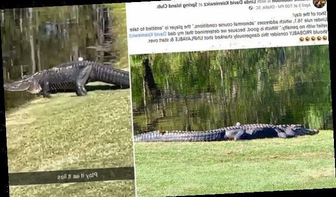 Moment golf shot lands on the back of seven-foot alligator