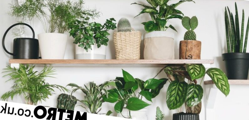17 houseplants that naturally purify the air