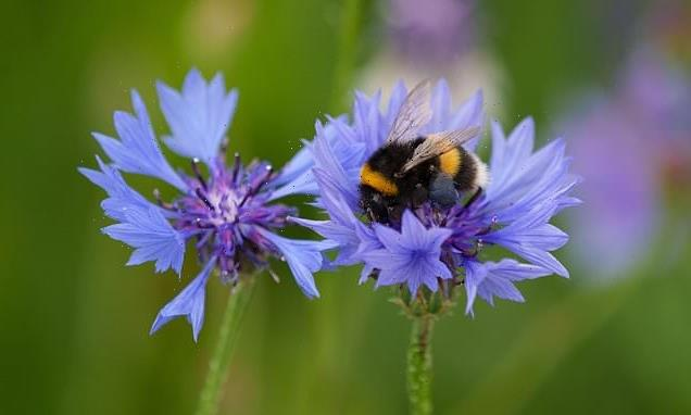 Bees use electricity to charm plants into releasing scents