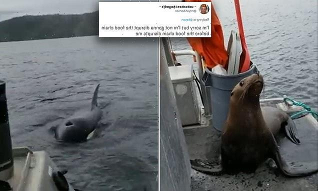 Captain posts TikTok of herself kicking a sea lion off boat to orcas