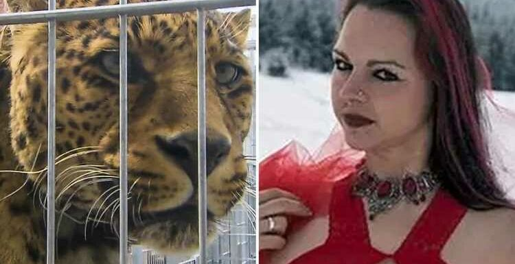 I thought I was going to bleed to death as leopard ripped by face open during photoshoot – but I don't want him put down