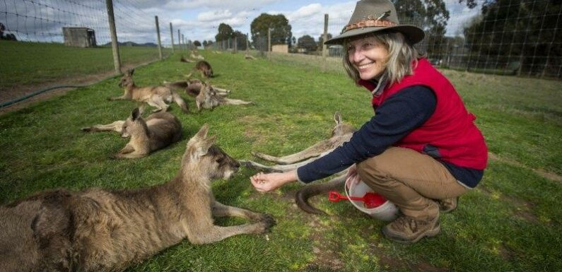 Jumpy roos the first sign of trouble as quake hit Mansfield