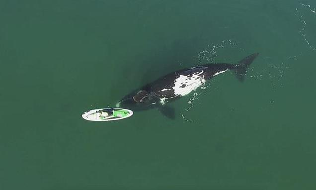 VIDEO: Whale encounters a paddleboarder off Argentine coast