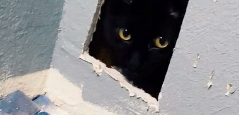 Woman's missing cat found alive and hidden in wall after renovation blunder