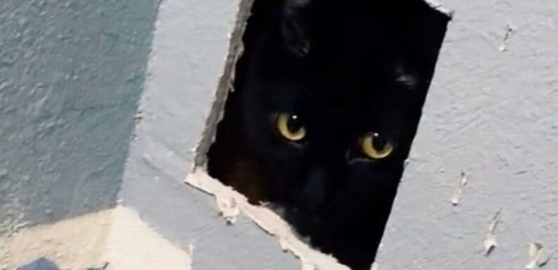Horrified woman discovers her lost cat in her walls after shocking renovation gaff