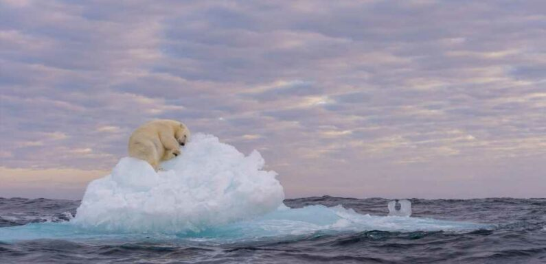 Incredible photo of polar bear lazing on iceberg highlights climate change & wins prize at photography awards