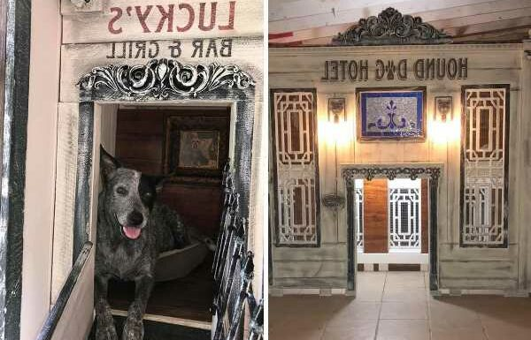 Inside Texas's two-story doghouse 'mansion' with a balcony and stained windows housing 16 rescue pups