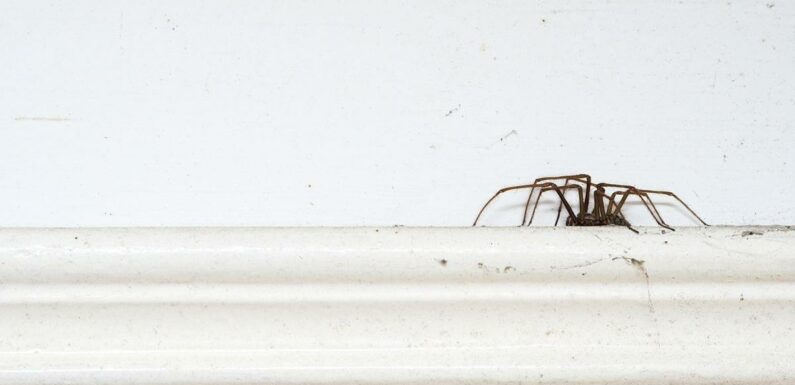 Lynsey Crombie shares tips to oust spiders and moths from homes