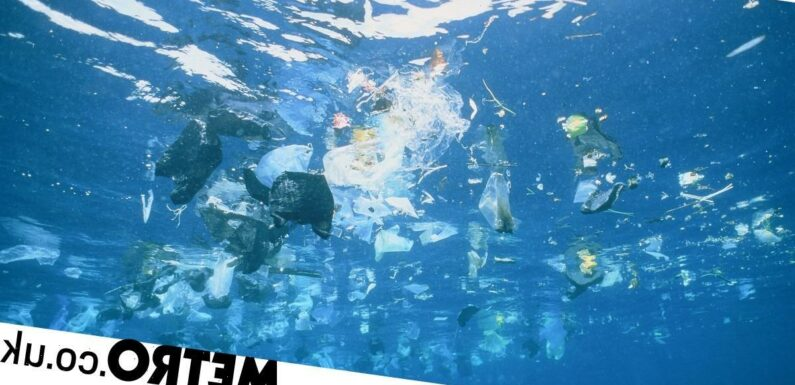 Mountains of plastic 'weighing the same as 40 blue whales' floating in the Med
